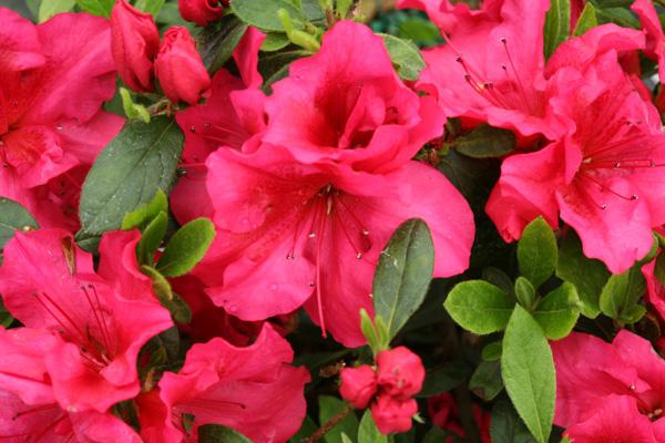 Bloomathon Red